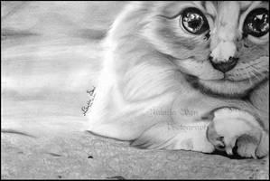 ..:: Miau ::..