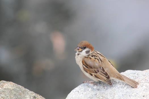 Ordinary but Cute Bird