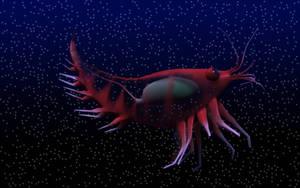 Krill by mainbearing