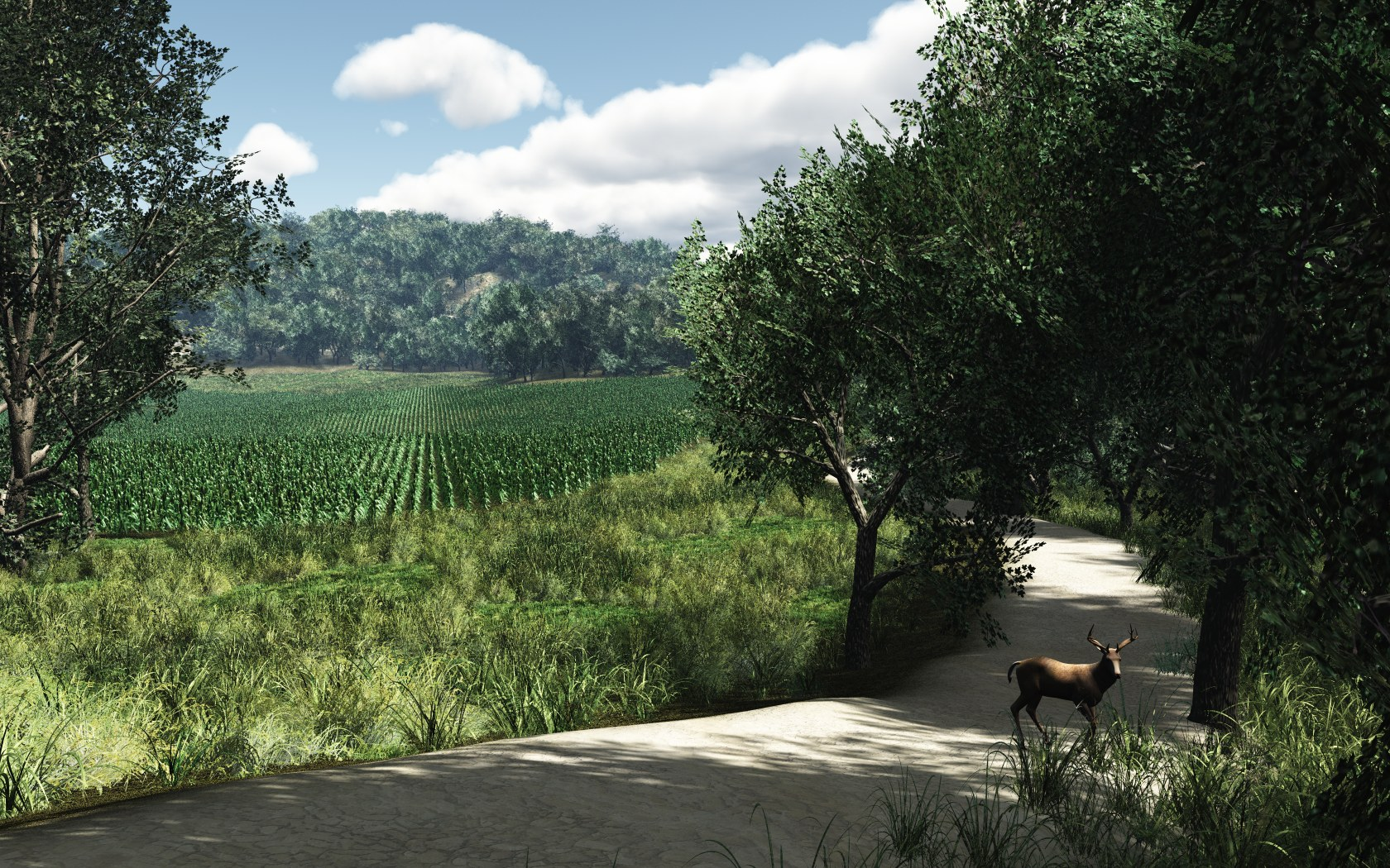 Farm Road by mainbearing