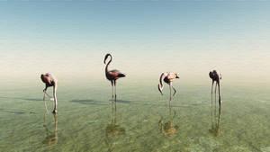 Flamingoes by mainbearing