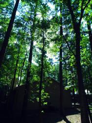 Tall trees by Zena-Xina