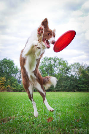 Let's frisbee :DD by FreestylePaws