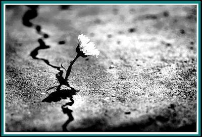 Flower 1 by Ska-tastrofe