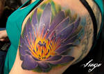 ' Water Lily '