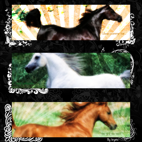 ~krysta graph~  - Page 2 Horse_compo_by_Creamia