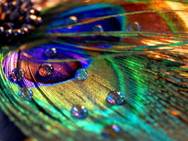 Feather Drops by OcularFracture