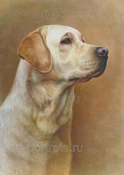 Labrador drawings