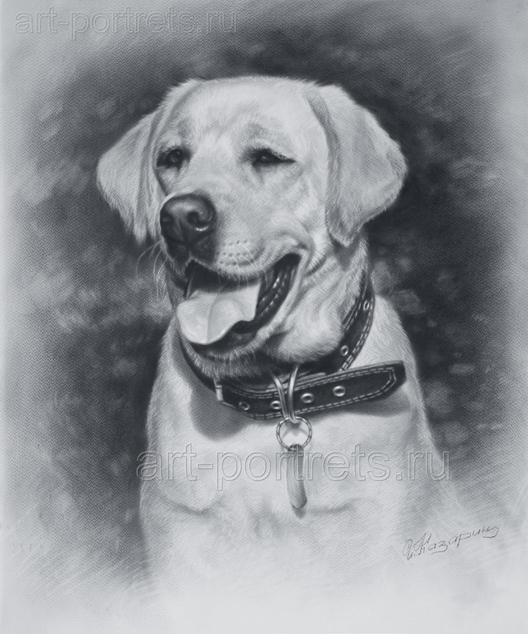 Lalbrador Dog Drawing By Drawing-Portraits On DeviantArt
