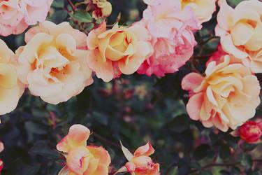 Autumn - 5 by DaphneWolfsong