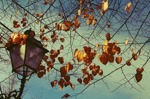 Autumn - 6 by DaphneWolfsong