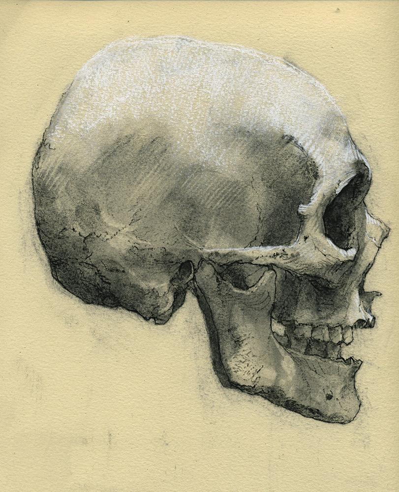 Skeleton Head by napoleoman