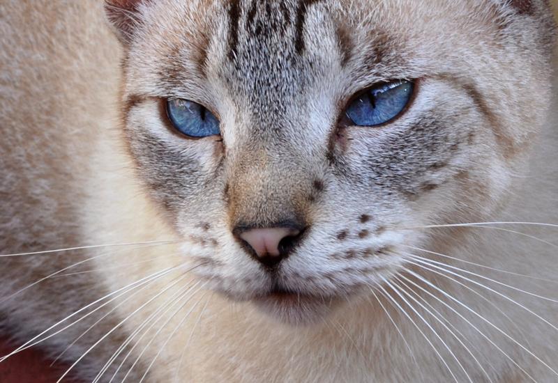 Behind blue eyes 2 by chronos-drako