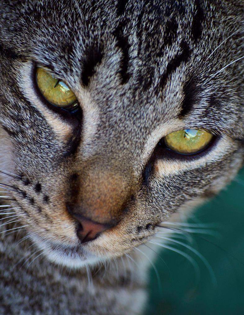 Gato guapote by chronos-drako