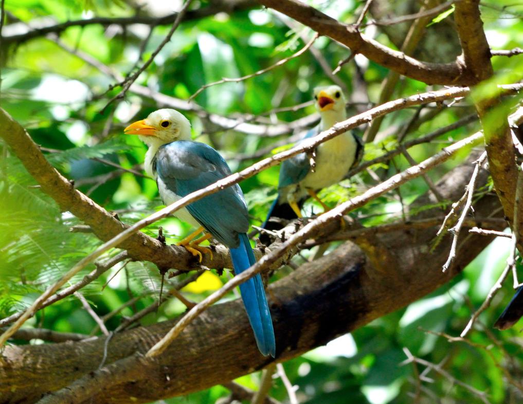 Young birds by chronos-drako