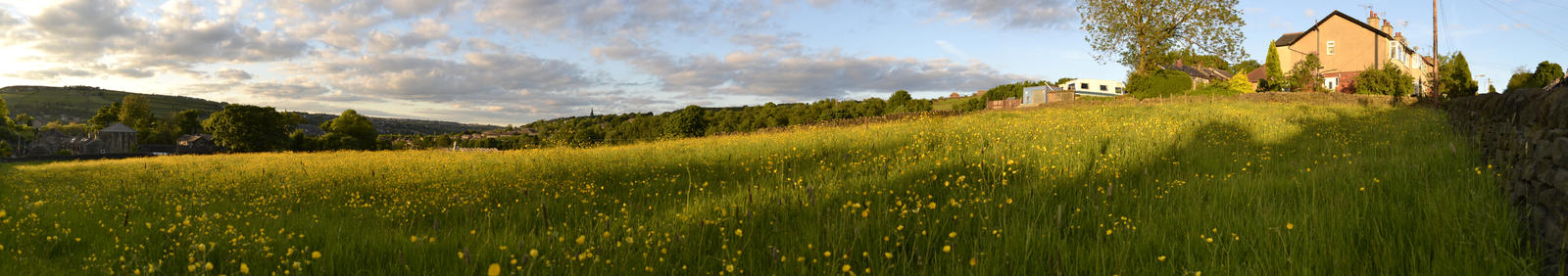 Sunny Buttercup Field Panorama by Septolum