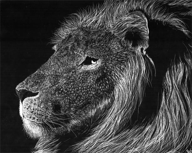 Lion Scratchboard By Andoledius