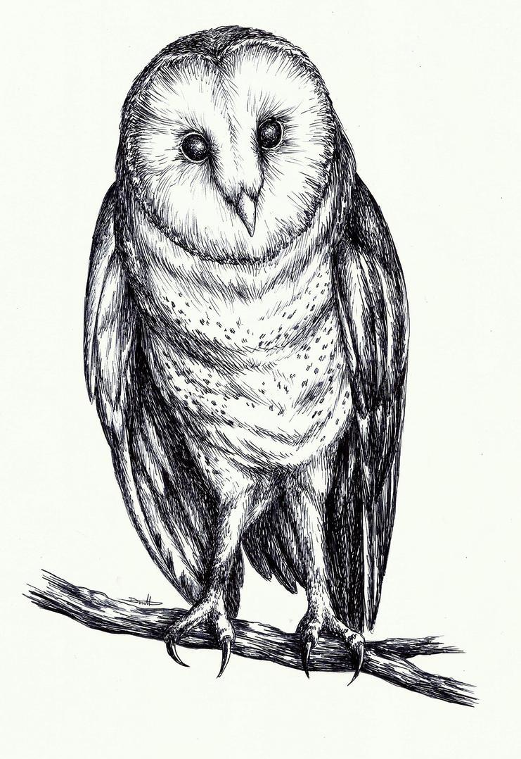 Owl by MadMonaLisa
