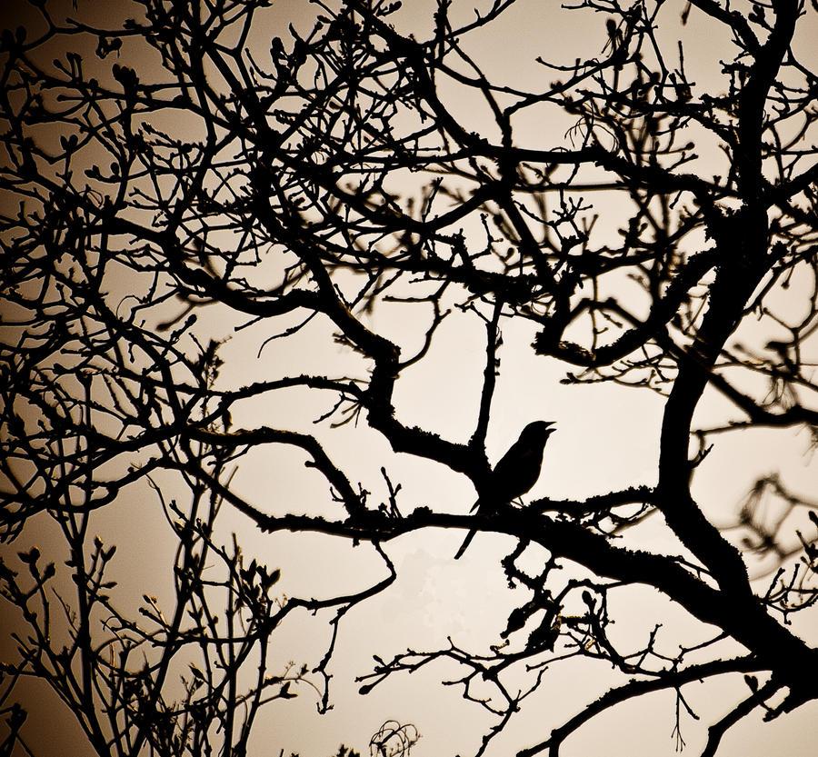 Birds by mep92