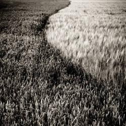 Sea of grain by mep92