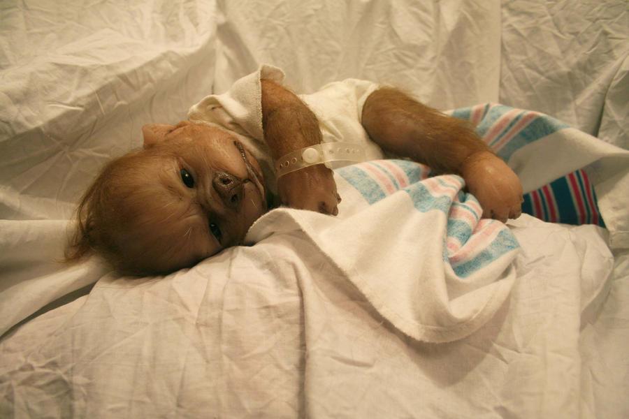 Little werewolf infant by WerePups