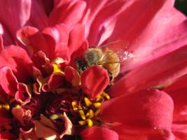 Bee in Flower by MidnaXX-231