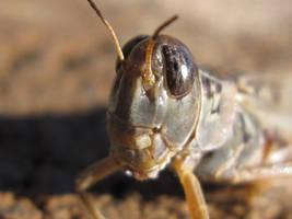 Grasshopper by MidnaXX-231
