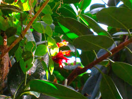 Sunlit Flower by MidnaXX-231