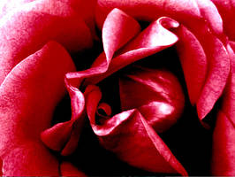 Rose Paper Effect by MidnaXX-231
