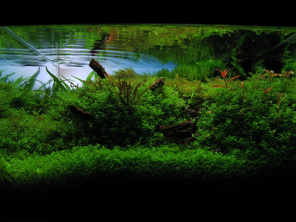 Ada Aquascaping Contest 2008 By Berkleyone ...