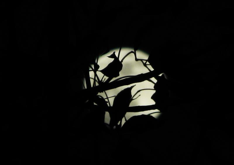 Spotlight_by_Emunator.jpg