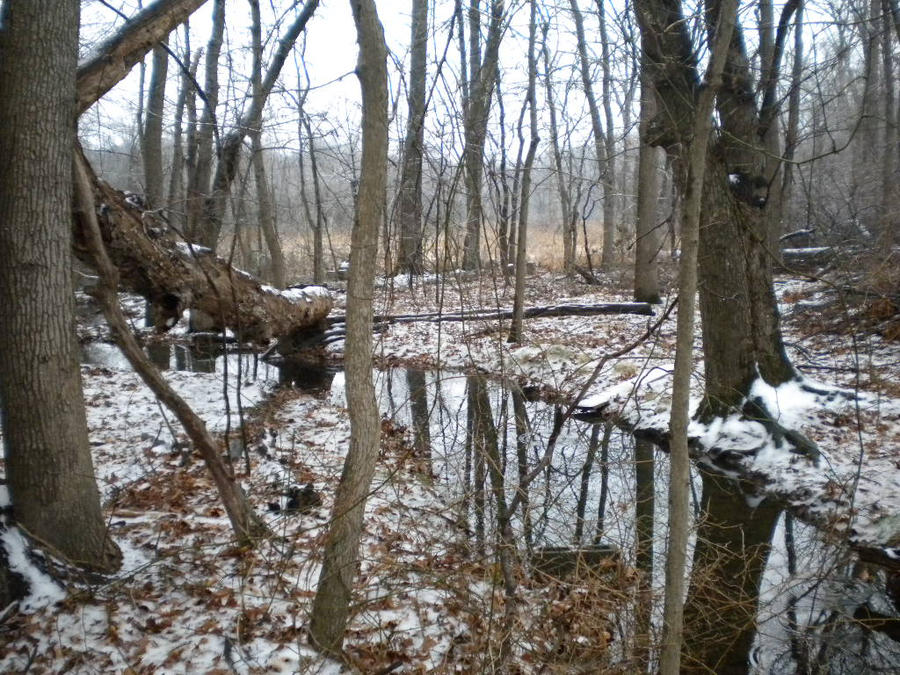 Winter-scape by Nocturndarkestar
