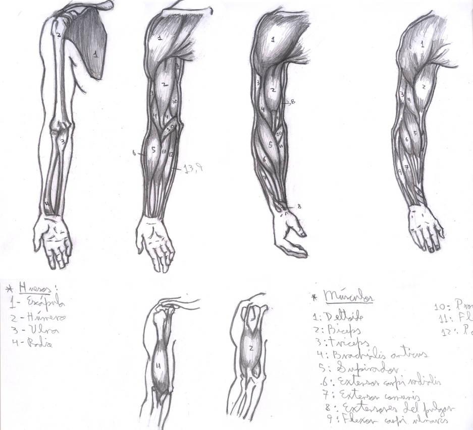 Arms by jdsart