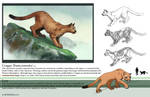 Cougar Study