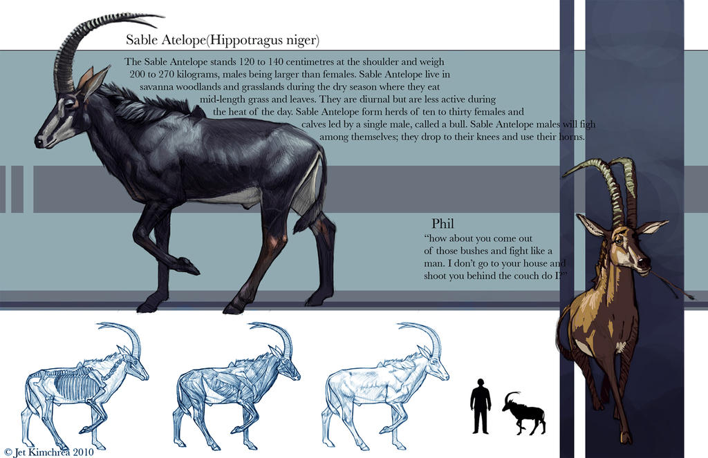 Sable Antelope Bovine study by JetEffects on DeviantArt