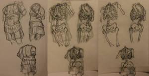 Anatomy: Torso Overlays