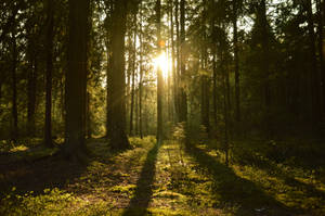walk through the forest by strcplp3