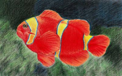Coralreeffish by Zahorbenskyi