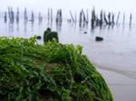 Seaweed by jaimejouelapiano