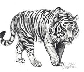 Tigered