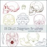 Skull Diagram Brushes