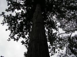 Tree by Nigelapatomoto