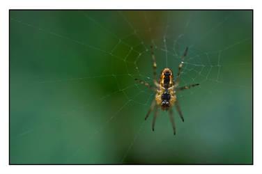 DSC0010 1096 Spider at work by DeBeerG