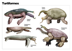 The Diversity of Turtiformes by nemo-ramjet