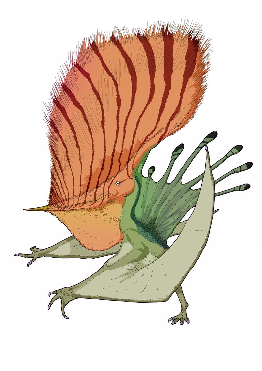 David Peters' Pteranodon