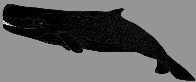 'Leviathan' melvillei by nemo-ramjet