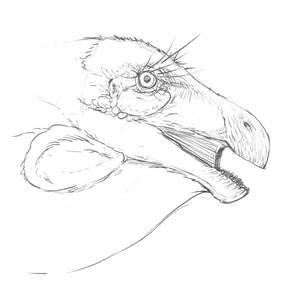 From My Sketch Blog - Therizinosaurus Head Study