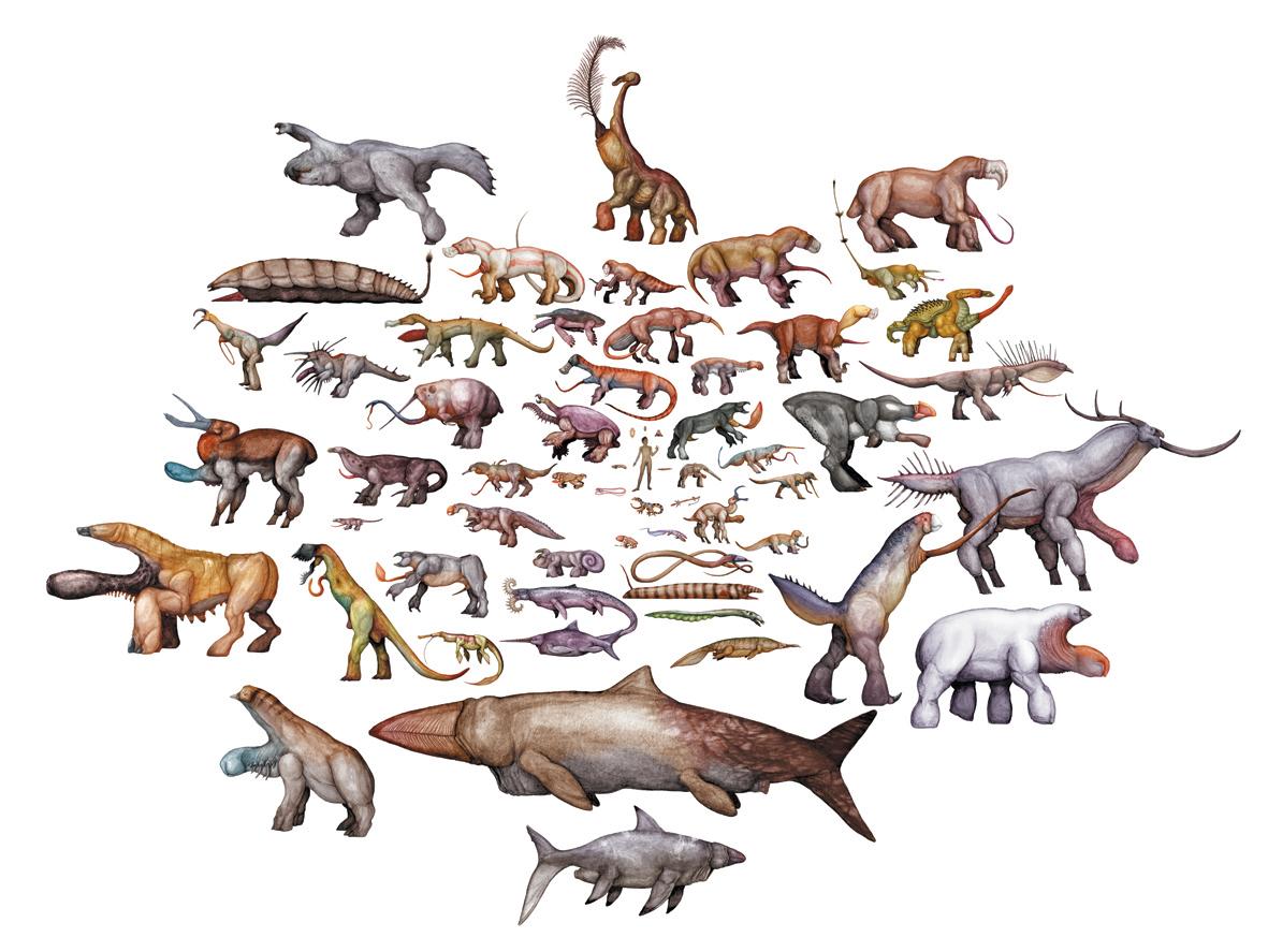 evolution of animals - HD1181×887