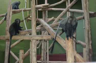 Zoo Antwerpen I like you by flety007