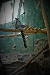 Zoo Antwerpen  I'm the  only real boss by flety007